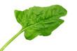 Fresh Spinach leaf