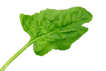 Fresh Spinach leaf