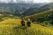 Rice fields on terraced of Mu Cang Chai, YenBai, Vietnam. - 80397522