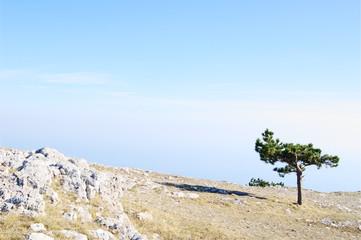 Mountain landscape with Crimean pine, AI-Petri, Crimea.