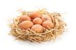 Chicken eggs in nest. - 80399503