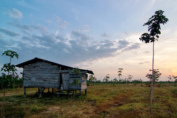 Old small wooden house at a rubber plantation in the morning