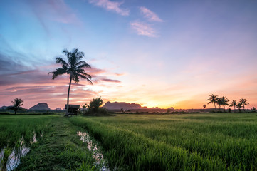 Beautiful panoramic rural landscape in the morning
