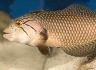 marine fish in water