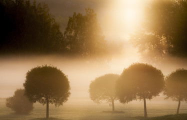 Morning Sun on Golf Course