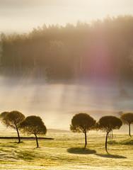 Morning Sun on Golf Course