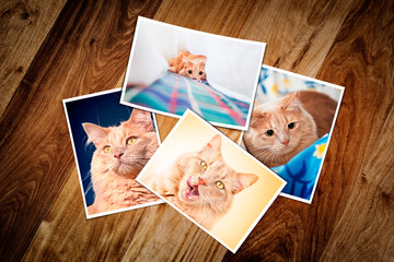 Composite empty photo frame with four cat photos