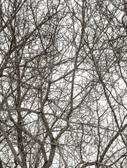 tree branches on a white background