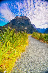 The way to mountain  Milford Sound New Zealand
