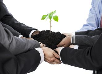 Businessmen holding soil with seedling