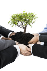 Business people holding little tree