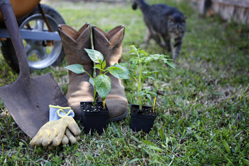 Grow organic: gardening tools and organic sprouts