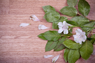 Green leaves and flowers on wooden background
