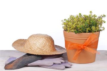 Thymian im Tontopf mit Strohhut und Gartenhandschuhen