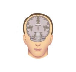 cerebro en cabeza