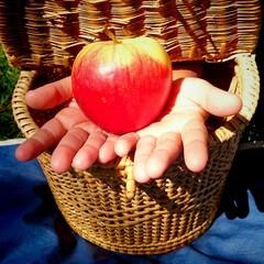 Manos con manzana saliendo de cesta