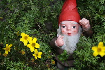 Gnome in the meadow