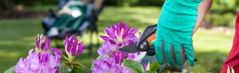 Man cut beautiful flowers