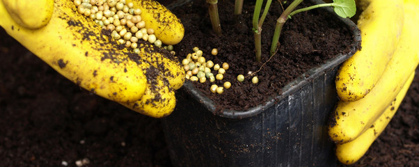 Putting a fertilizer in ground