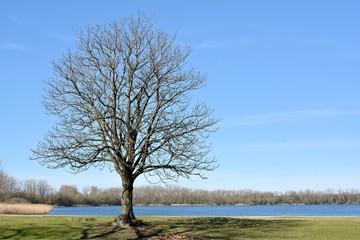 Kastanienbaum auf einer Wiese am See