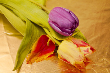 tulips on a golden background