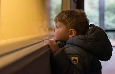 curious child looks through a window at the zoo