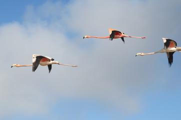 Flying pink flamingos