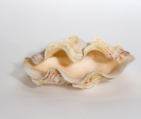 Sink giant clams on a light background