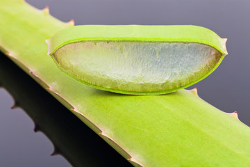 Aloe Vera (on Dark Mirror Plate)