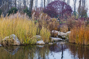 autumn pond with yellowed reeds and bushes