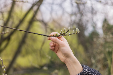 Hand touching spring buds