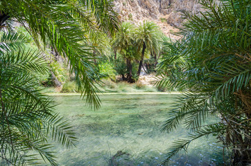 Palms near green river in Preveli, Crete island