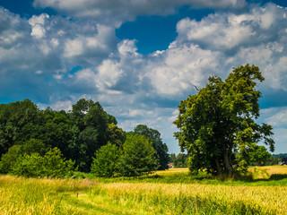 Landschaft blüht unter weiß-blauem Himmel