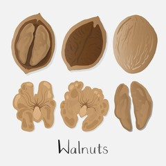 Walnuts illustration set