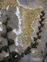 Wandschäden durch Efeu