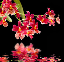 orchid with water reflection