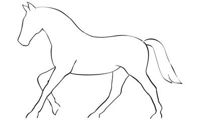 Pferd Reitsport