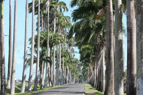 Fotobehang Caraïben Guadeloupe - Allée du Manoir - Janv 2015 - Nath