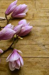 Magnolia liliiflora Magnolien Magnolie モクレン属 Магнолия