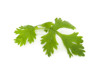coriander for food decoration Isolated On White