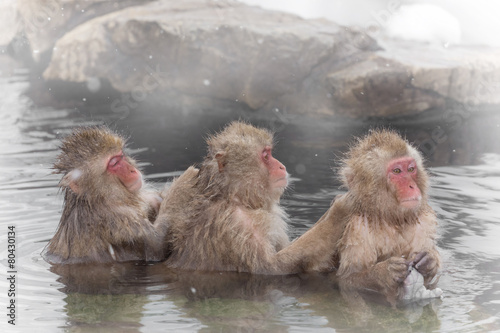Poster Aap お風呂で背中を流し合うおさるさん monkey which washes a hot spring