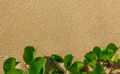 Areia e folhas