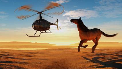 Horse in the desert.