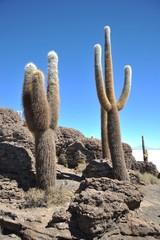 Island Inca Wasi - cactus island