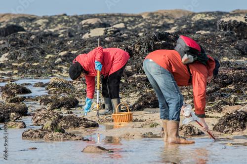 Deurstickers Vissen Grande marée, pêche à pied