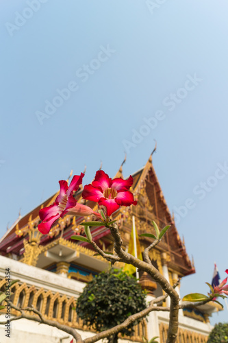 Deurstickers Frangipani plumeria flower with the temple background