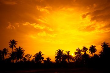 vintage filter : silhouette landscape of coconut tree ,tropical