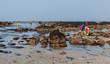 Grande marée, pêche à pied - 80435124