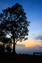 Big tree silhouetted on evening