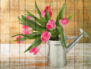 Bouquet of fresh pink  tulips in  watering can
